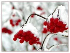 berry-354247_1920